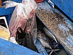 バンダでお買い物した魚