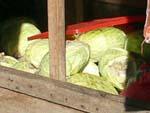キャベツと白菜の屋台のアップ