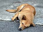 日陰のコンクリートで涼む犬