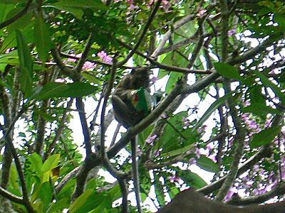 木の上に上がってゆっくりとポテチを食べる猿