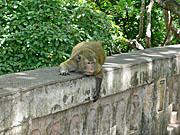 明らかに何かをねらっている猿