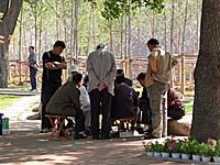 公園でトランプをやる人々