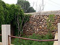 水師営のナツメの木