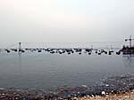 海鮮市場の沖に停泊中の漁船