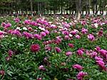 南湖公園の花