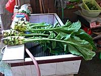 茎はアスパラっぽい不思議な中国野菜