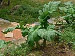 隙間があると野菜を植えてある