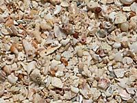 アンコンビーチの砂をクローズアップ