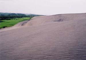 砂丘の写真
