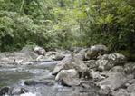 タベウニ島の森の中