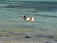 ヤサワにはなぜか魚を捕ろうとする犬が多かった