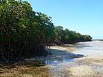 マングローブに囲まれたXubulau島