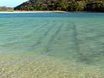 ロングビーチ 砂が波打ったまま水が満ちる