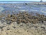 干潮時にはサンゴが海上に顔を出す