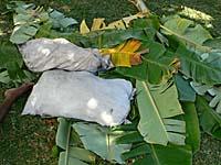 芋を入れるのに備えて準備中のバナナの葉