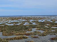 干潮の時は珊瑚畑が海上に浮き出る