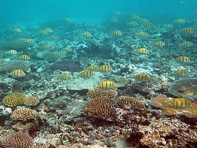 目の前の海はサンゴとお魚がいっぱい!