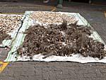 カバの材料の木の根を干す