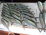 市場に売られている魚:鯖みたいに光っている魚