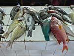 市場に売られている魚:カラフルな南国魚