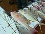 市場に売られている魚:淡泊そうな白身魚に見える