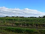バスの車窓から:サトウキビ畑が延々と広がる