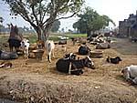 スジャータ村の様子2