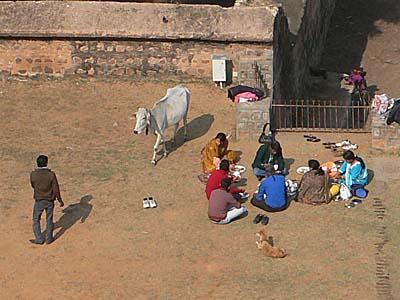 お弁当を牛に狙われた家族