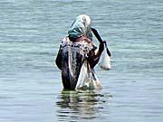 浜で貝を探しているお母さん