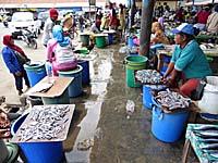 南の市場の魚売り場