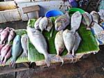 市場の魚。トロピカルな感じ。