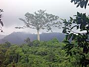 山の上にある木