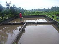 鯉を養殖している池