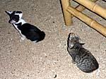 毎日餌をあさりに来る猫