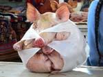 袋詰めの豚ちゃん
