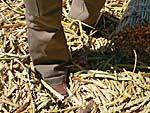 歩くと足が沈む。足が葦に足を取られる