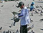 鳩に豆をやる少年