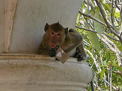 ペッチャブリーカオワンにいた猿