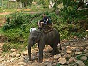 トレッキングツアーの象乗り体験