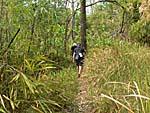 藪漕ぎをしながら山を歩く