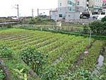 温泉空芯菜畑