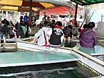 温泉魚に参加する若者たち