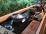 公共温泉の温泉魚