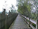 池の周りに整備された遊歩道