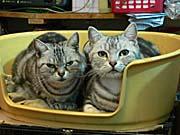 2匹の猫。前を向いてくれるまで辛抱して待った
