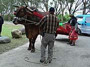 牛が車と繋がれて牛車スタンバイ