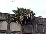 駅舎の上に生える木に引っかかっている竹筒