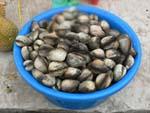 籠一杯の貝