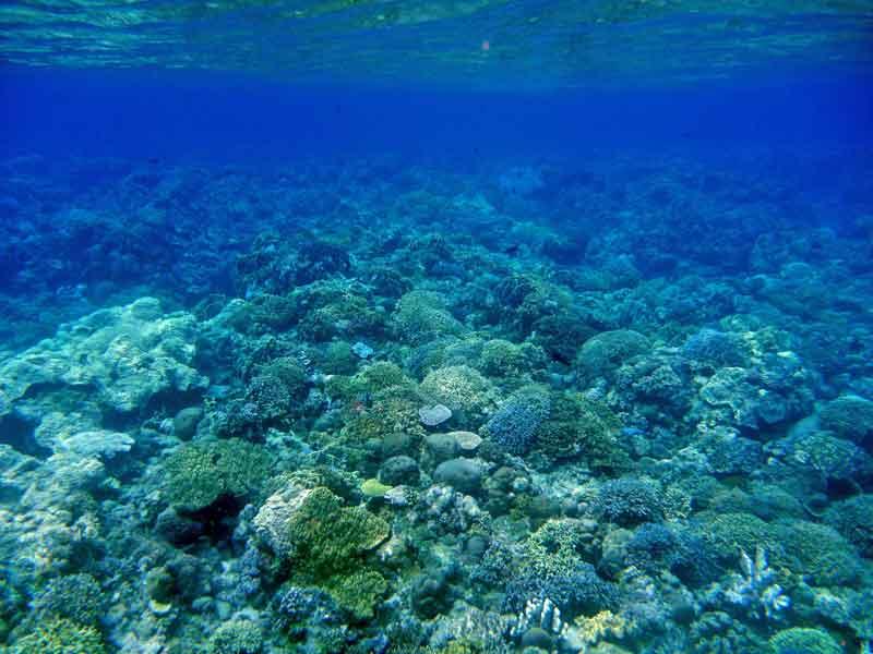 ハッタ島でシュノーケリング2:群青色の海と巨大魚に魚群