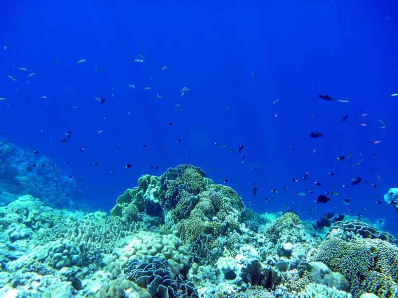 アイ島 ビーチエントリーでサンゴ礁シュノーケリング三昧!